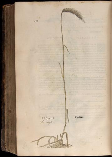 Image of Fuchs-1542-768