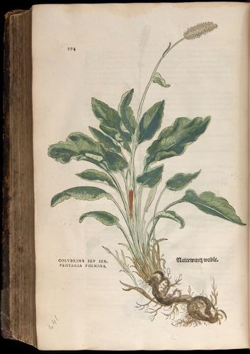 Image of Fuchs-1542-774