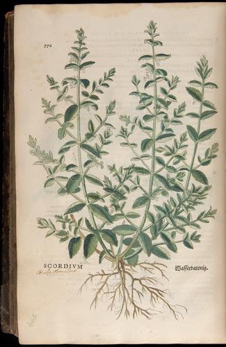 Image of Fuchs-1542-776