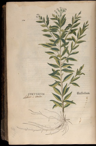 Image of Fuchs-1542-780