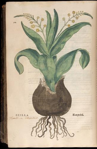 Image of Fuchs-1542-782