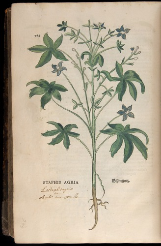Image of Fuchs-1542-784
