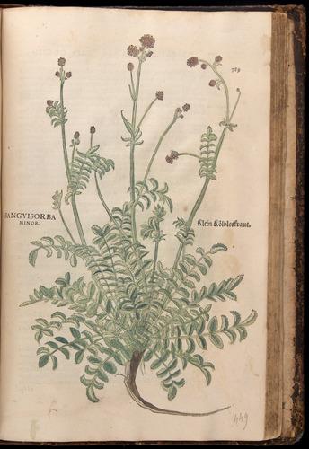 Image of Fuchs-1542-789