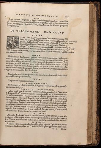 Image of Fuchs-1542-795