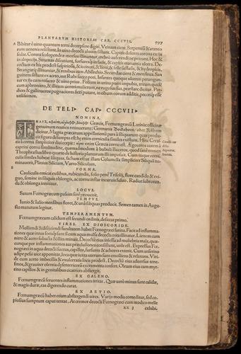 Image of Fuchs-1542-797