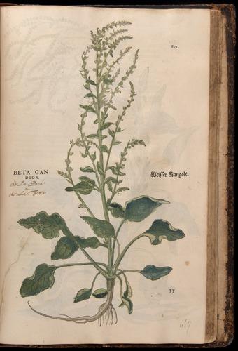 Image of Fuchs-1542-805