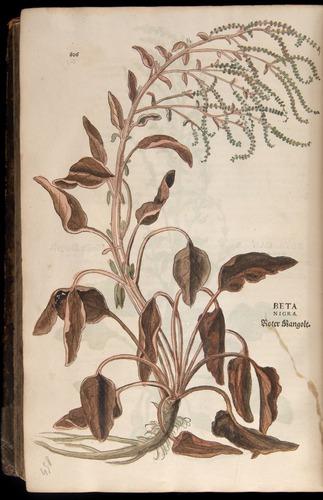 Image of Fuchs-1542-806