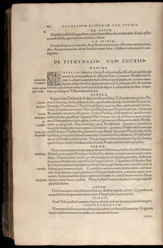 Image of Fuchs-1542-810