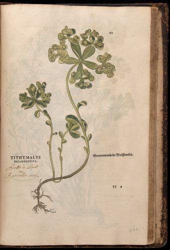 Image of Fuchs-1542-811