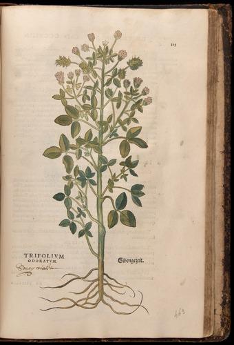 Image of Fuchs-1542-815