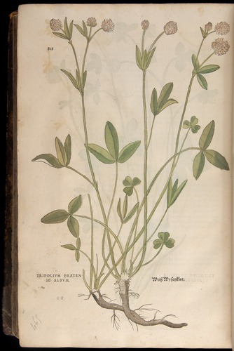 Image of Fuchs-1542-818