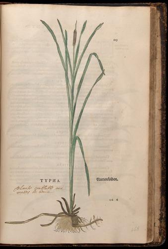 Image of Fuchs-1542-823