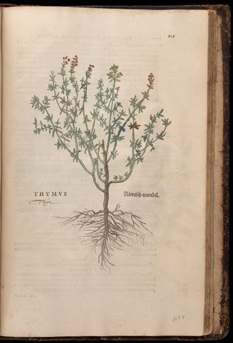 Image of Fuchs-1542-827