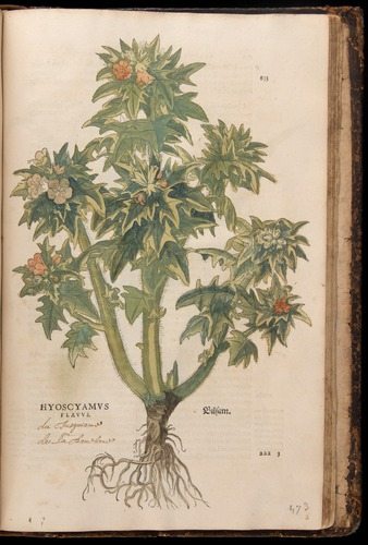 Image of Fuchs-1542-833