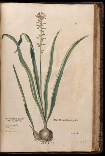 Image of Fuchs-1542-835