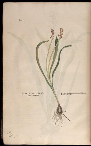 Image of Fuchs-1542-836