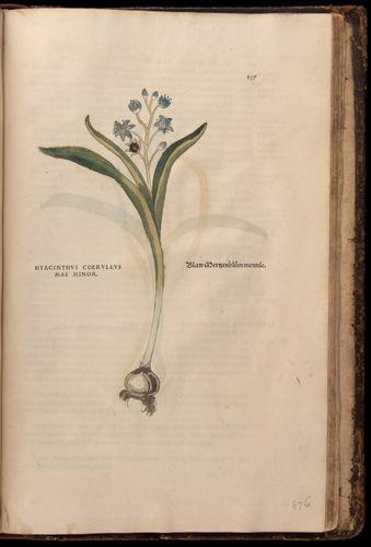 Image of Fuchs-1542-837