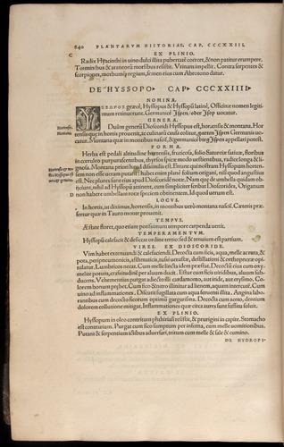 Image of Fuchs-1542-840