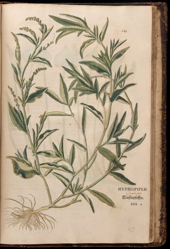 Image of Fuchs-1542-843