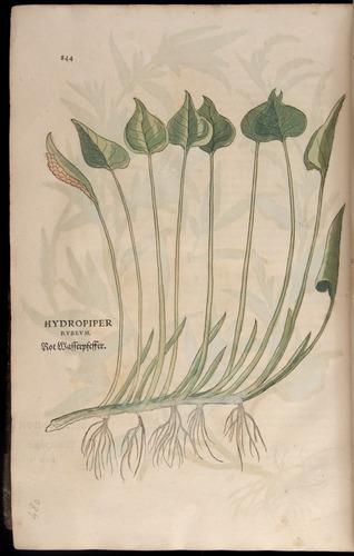 Image of Fuchs-1542-844