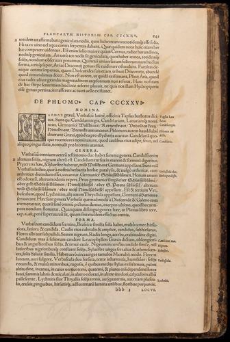 Image of Fuchs-1542-845