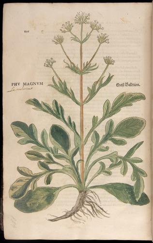 Image of Fuchs-1542-856