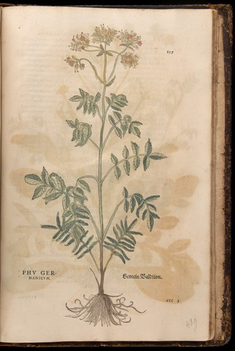 Image of Fuchs-1542-857