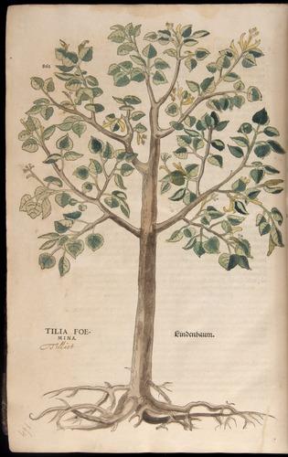 Image of Fuchs-1542-862