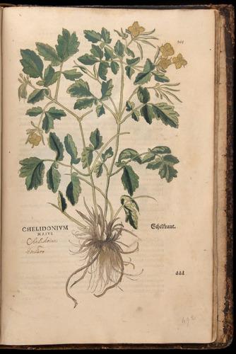Image of Fuchs-1542-865