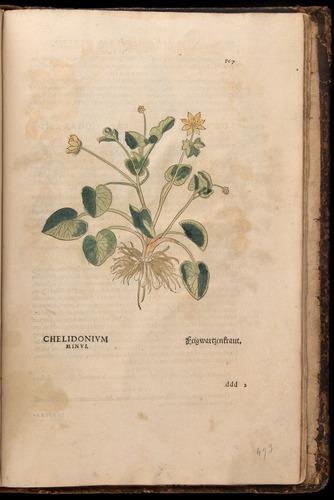 Image of Fuchs-1542-867