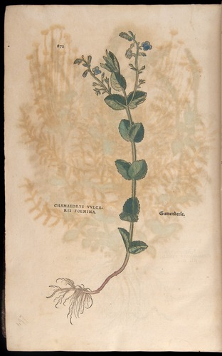 Image of Fuchs-1542-872
