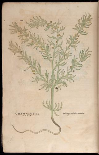 Image of Fuchs-1542-886