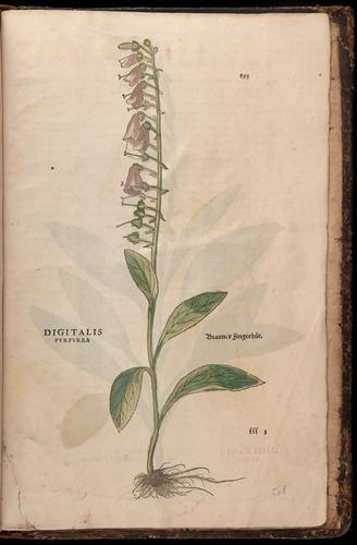 Image of Fuchs-1542-893