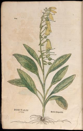 Image of Fuchs-1542-894
