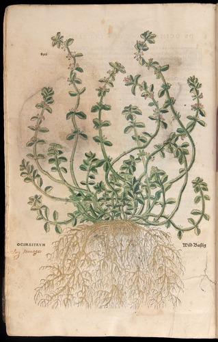 Image of Fuchs-1542-896