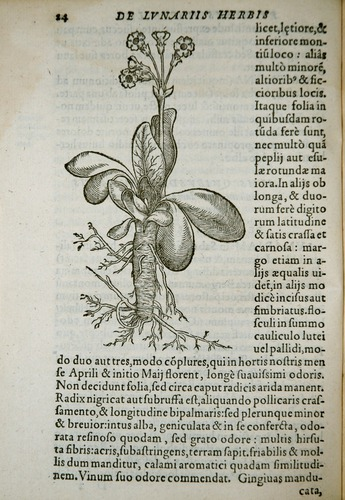 Image of Gesner-1555-00024