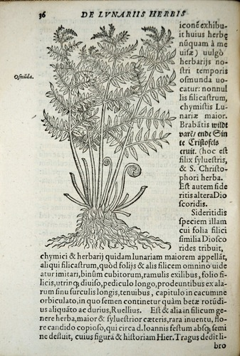 Image of Gesner-1555-00036