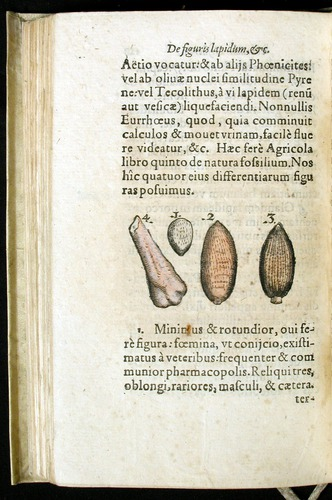 Image of Gesner-1565a-0128v