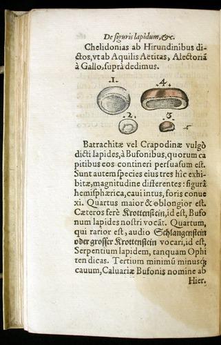 Image of Gesner-1565a-0161v