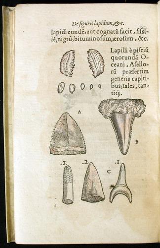 Image of Gesner-1565a-0162v