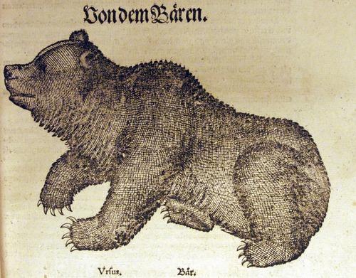 Image of Gesner-1583-det-2c2r