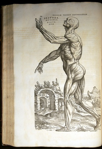 Image of Vesalius-1543-174