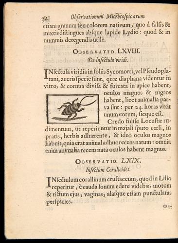 Image of Borel-1656-034
