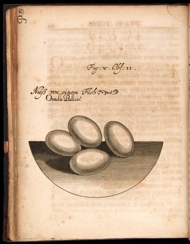 Image of Griendel-1687-018-f05v