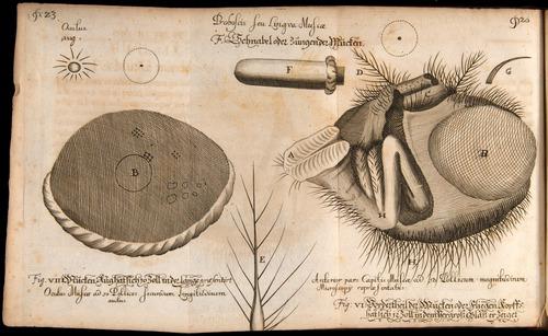 Image of Griendel-1687-022-f07v