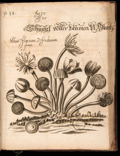 Image of Griendel-1687-048-f04r