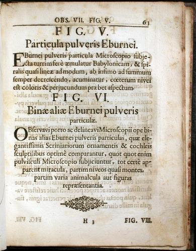 Image of Griendel-1687-061