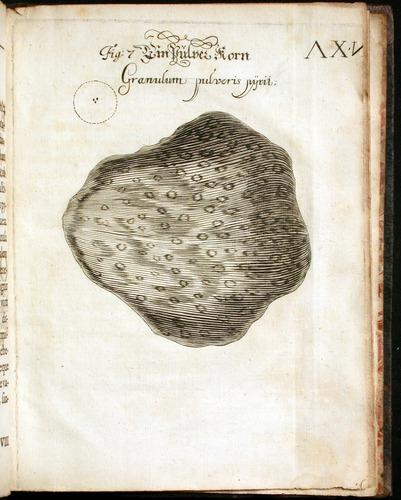 Image of Griendel-1687-064-pl