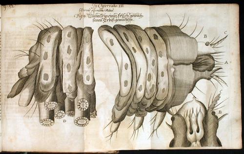 Image of Griendel-1687-32-Obs3-fig4