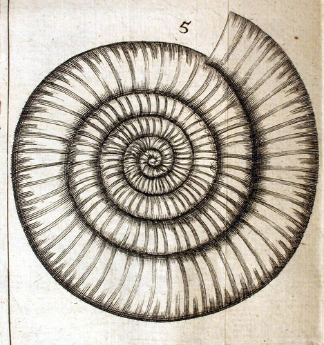 Image of Lister-1678-Ammonite